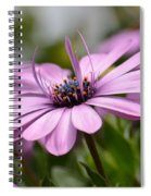 Touch Of Elegance Spiral Notebook