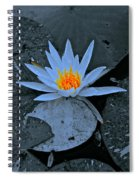 Touch Of Gold In Lily Spiral Notebook
