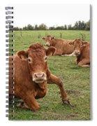 Tough Cows Spiral Notebook