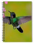 Tourmaline Sunangel Hummingbird Spiral Notebook