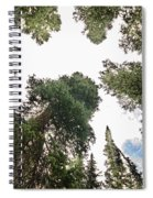 Towering Pine Trees Spiral Notebook