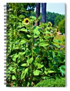 Towering Sunflowers Spiral Notebook