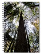 Towering Timber Spiral Notebook