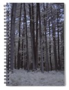 Towering Trees Over Ferns In Blue Spiral Notebook