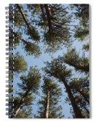 Towering White Pines Spiral Notebook
