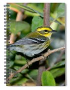Townsends Warbler In Tree Spiral Notebook