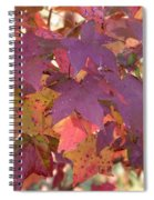 Traces Of Fall Spiral Notebook