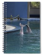 Trainer And 2 Dolphins At The Underwater World In Sentosa Spiral Notebook