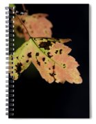 Translucent Maple Leaf Spiral Notebook