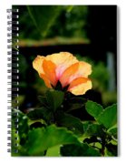 Translucent Spiral Notebook