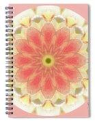 Translucent Tulip Spiral Notebook