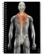 Trapezius Muscle With Skeleton Spiral Notebook