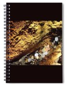 Treasure Bark 4 Spiral Notebook