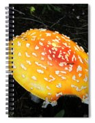 Treasures Of The Forest Two Spiral Notebook