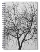 Tree Abstract In Black And White Spiral Notebook