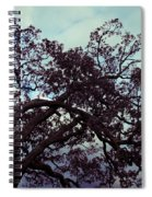 Tree Against Sky Spiral Notebook