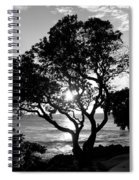 Tree And Sun Spiral Notebook