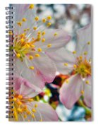 Tree Blossom Spiral Notebook