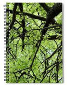 Tree Branches  Spiral Notebook