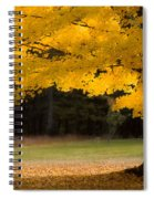 Tree Canopy Glowing In The Morning Sun Spiral Notebook