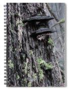 Tree Conk Spiral Notebook