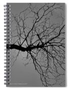 Tree Fall Spiral Notebook
