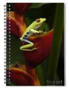 Tree Frog 3 Spiral Notebook