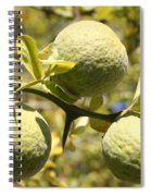 Tree Fruit Spiral Notebook