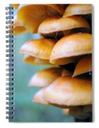 Tree Growth Spiral Notebook
