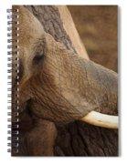 Tree Hugging Elephant Spiral Notebook