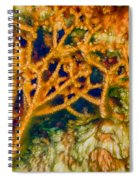 Tree In A Park Hot Springs Spiral Notebook