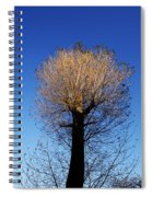 Tree In Afternoon Sunlight Spiral Notebook