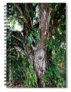 Tree In Kauai Spiral Notebook