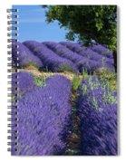Tree In Lavender Spiral Notebook