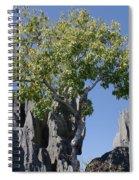 Tree In The Tsingy De Bemaraha Madagascar Spiral Notebook