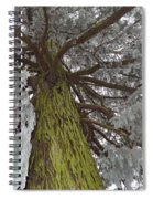 Tree In Winter Spiral Notebook
