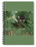 Tree Kitten Spiral Notebook
