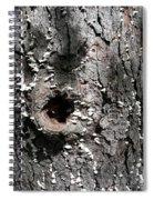 Tree Lichen Hole Spiral Notebook