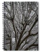 Tree Limb 4 Spiral Notebook