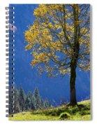 Tree Of Seasons Spiral Notebook