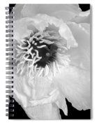 Tree Peony Close Up Black And White Spiral Notebook