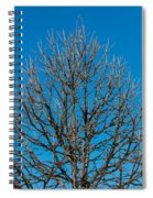Tree Profile Spiral Notebook