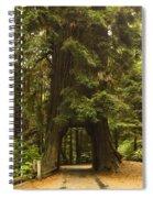 Tree Redwood Ca 7 Spiral Notebook