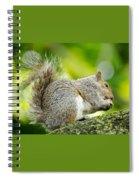 Tree Squirrel Spiral Notebook