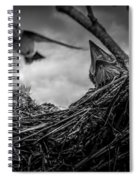 Tree Swallows In Nest Spiral Notebook