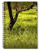 Tree Trunks In A Peach Orchard Spiral Notebook