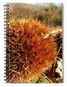 Tree Urchin Spiral Notebook