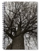Tree Web Spiral Notebook