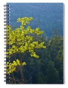 Tree With Yellow Leaves In Acadia National Park Spiral Notebook