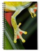 Treefrog Foot Spiral Notebook
